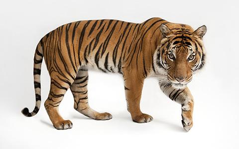 Шефство над животным в московском зоопарке