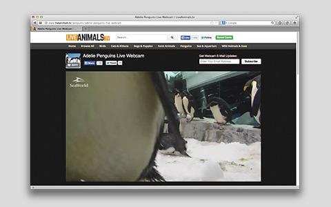 Live Animals TV