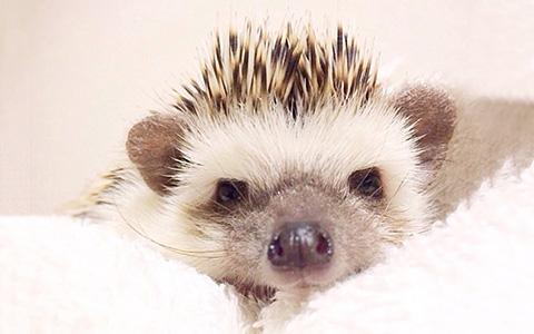 Turbo the Hedgehog