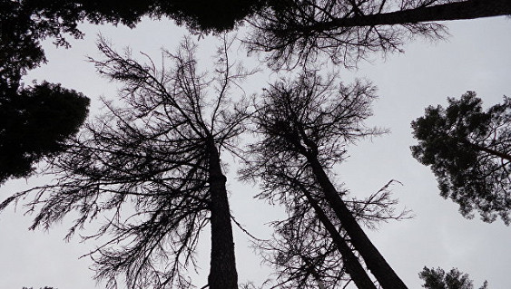 Ввоздухе Финляндии иЭстонии найден радиоактивный йод, докладывают СМИ