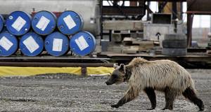 Нефть вступила в медвежий тренд