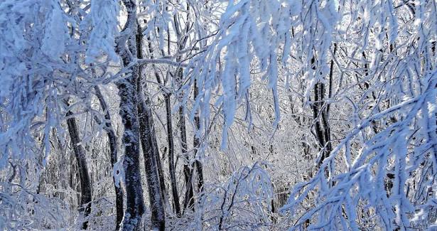 ВВоронеже неделя начнется смокрого снега