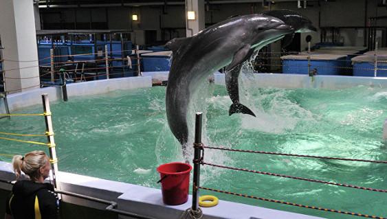 Вокеанариуме, который открывал Путин, молотком убили детеныша морского льва