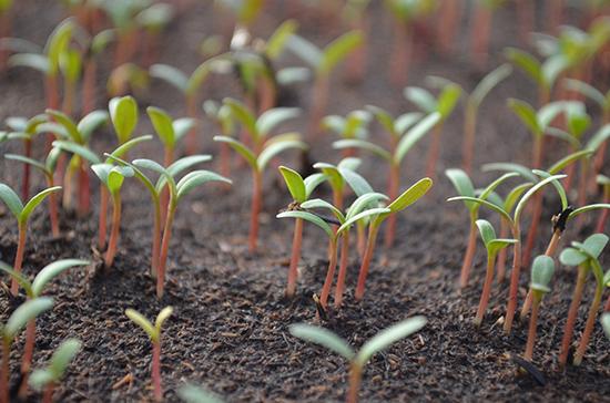 ВКрыму создадут уникальный селекционно-семеноводческий центр