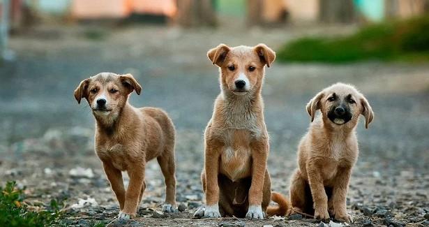 Неизвестные начали массово травить собак встолице ЕАО