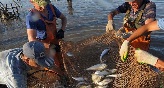 Рыбозаводы Сахалина ежегодно разводят более миллиарда мальков