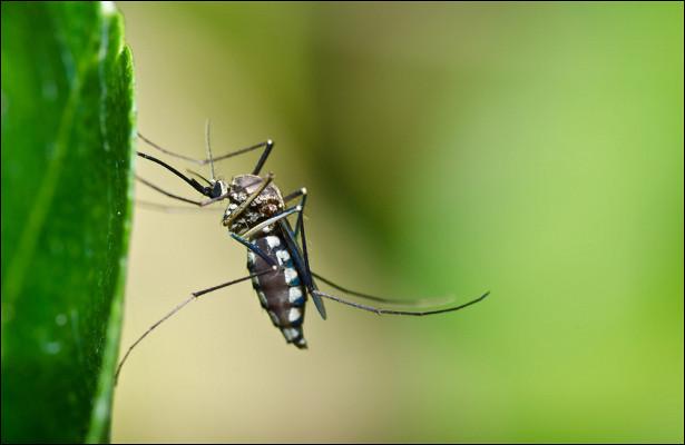 Билл Гейтс создает комаров-мутантов