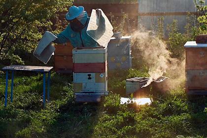 Вроссийском регионе завершилась образовательная программа дляпчеловодов