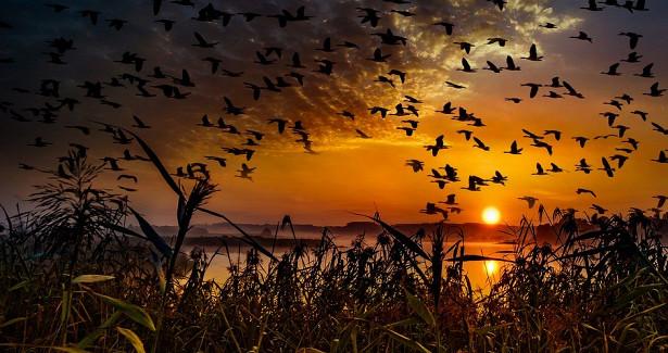 Перелётные птицы начали массовую миграцию наюгчерез Хабаровский край