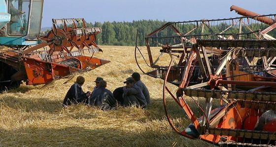 Пшеницу подкосила пошлина
