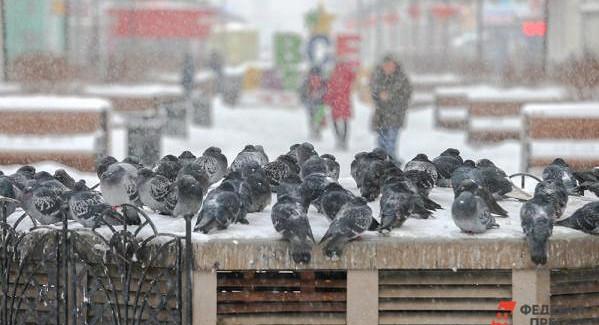Школьники нескольких регионов Приволжья неучатся из-заморозов