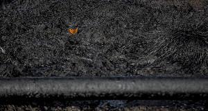 Нефтяники доплатят за разливы