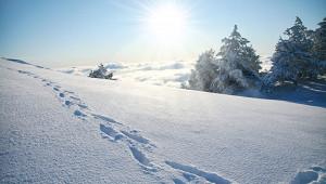 Напоминающее снежного человека существо напугало друзей