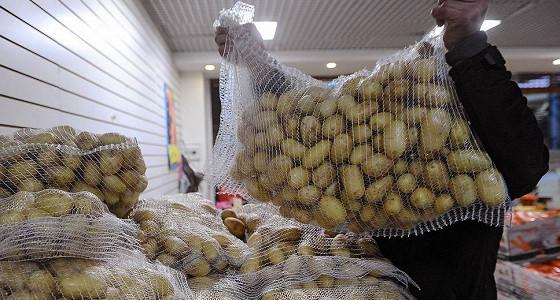 Роспотребнадзор проверит египетский картофель