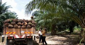 Цена на пальмовое масло достигла максимума с мая 2014 года
