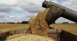 Россия экспортирует рекордные 30 млн тонн пшеницы