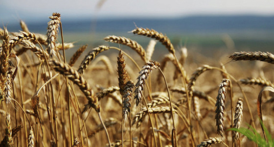 Турция предупредила о возможной остановке импорта агропродукции из РФ