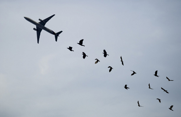 Почему столкновение птицы исамолета такопасно