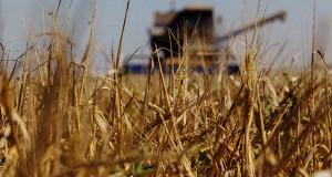Зерновую пошлину предлагают пересчитать