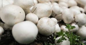 Сын генпрокурора Юрия Чайки займется грибами