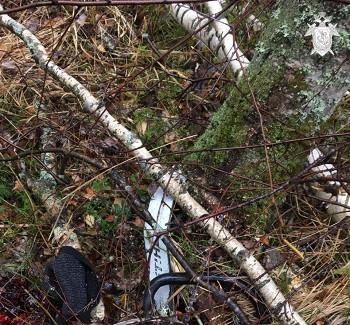 Дерево рухнуло намужчину около поселка Тёша вНижегородской области