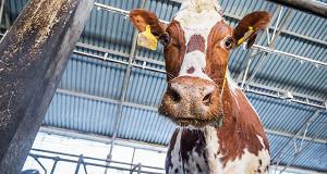 Государству пересчитали расходы на молоко