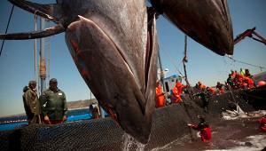 Россия согласилась выполнить требования Китая кэкспорту рыбы