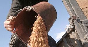 Господдержка сельхозстрахования в регионах уменьшена вдвое