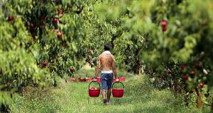 Рынок труда сохраняет зрелость