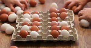Крупнейший российский производитель яиц завышал цены