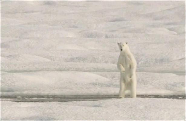 Россиянин встретился сбелым медведем ичудом выжил