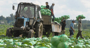 Минсельхоз прогнозирует снижение цен на овощи до 20%