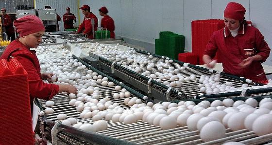 В Калужской области подорожали куры, масло, яйца, сыр и творог