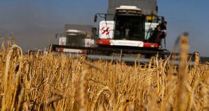 Высокий урожай зерна в РФ в 2017 году может привести к «ценовой катастрофе»