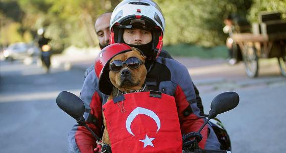 Экономика Турции отреагировала на проблемы
