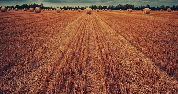 Экспорт сельхозпродукции изПриморья увеличился на10%