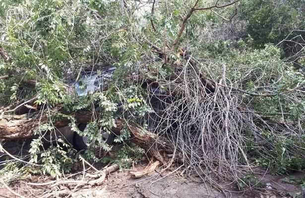 ВВолгограде упавшее дерево раздавило KIARio