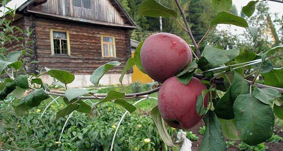 На огородах запретят строить капитальные дома