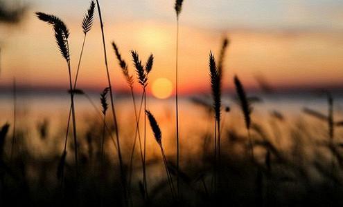 Слабый рубль продал пшеницу