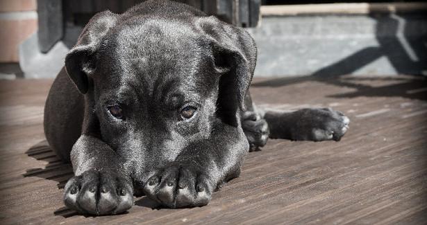 Большинство амурчан считают, чтобездомных животных нужно усыплять