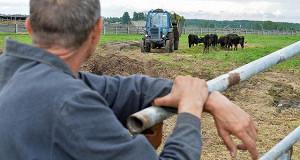 Малый бизнес не спешит заниматься сельским хозяйством