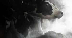 СП считает систему господдержки сельского хозяйства запутанной