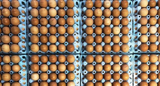 Россельхознадзор запретил транзит продукции птицеводства из США