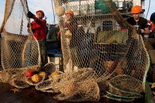 Финансирование рыбной науки на2021 годоказалось недостаточным