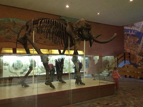 Фото палеонтологический музей
