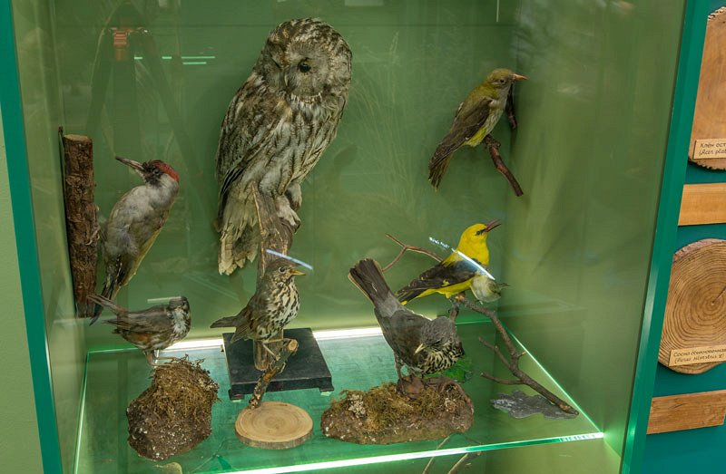 Зал природы в Тульском краеведческом музее смотреть фото