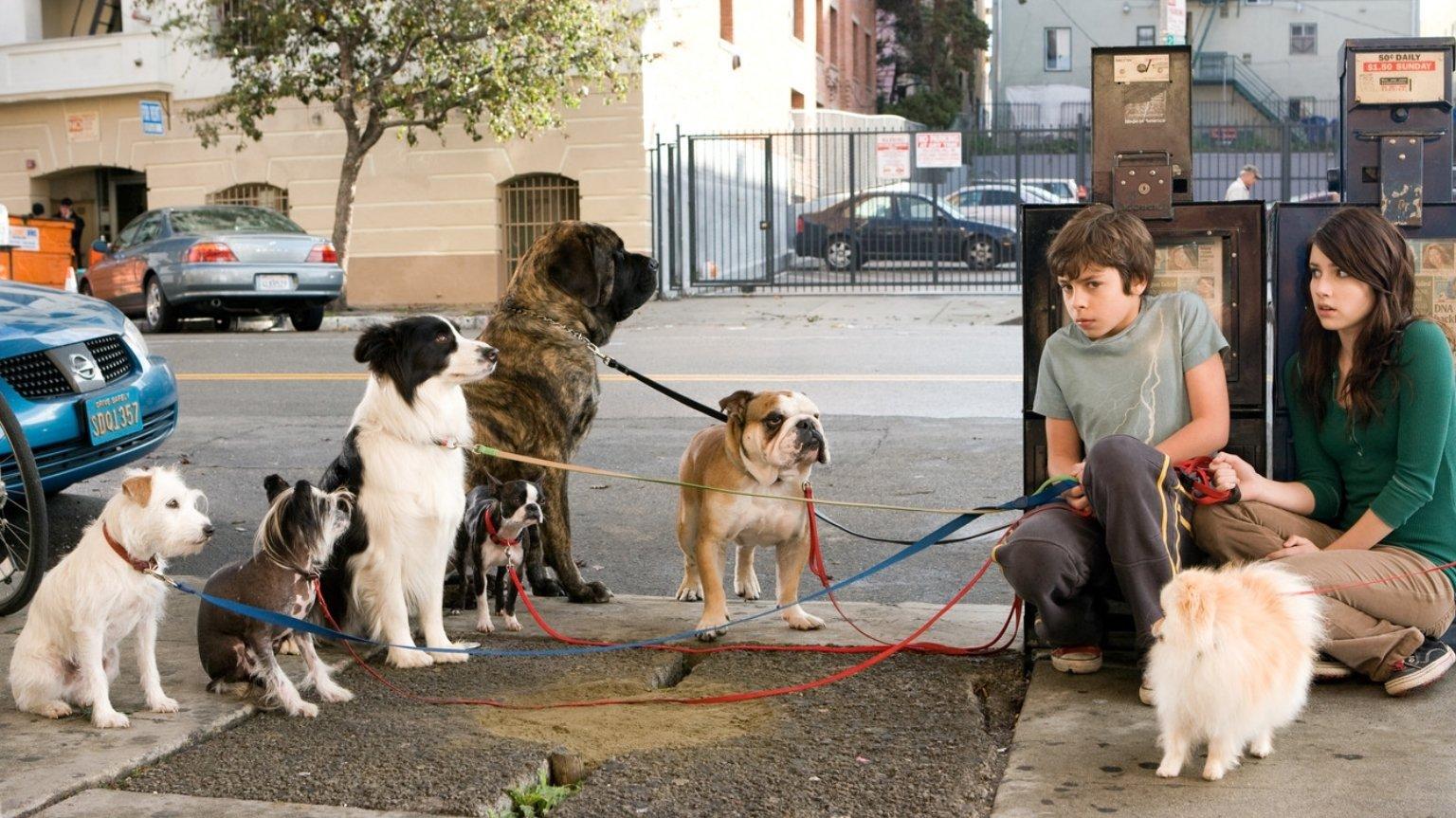 Отель для собак смотреть фото
