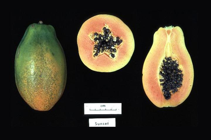 Японская ГМ-папайя — редкий пример трансгенного фрукта, разработки которого ведутся Японии. В основном, говоря о ГМО, подразумевают сою, кукурузу и рапс