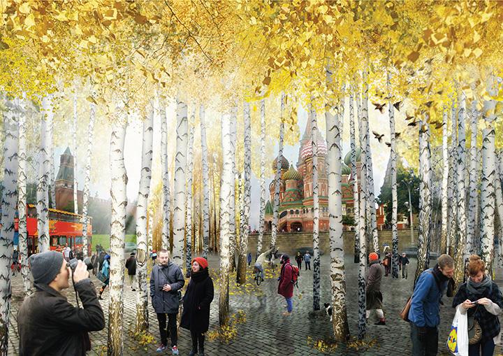Березы возле Красной площади