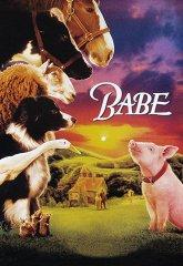 Постер Бэйб